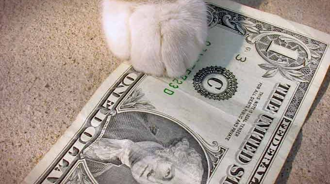 Dollar Cat Small